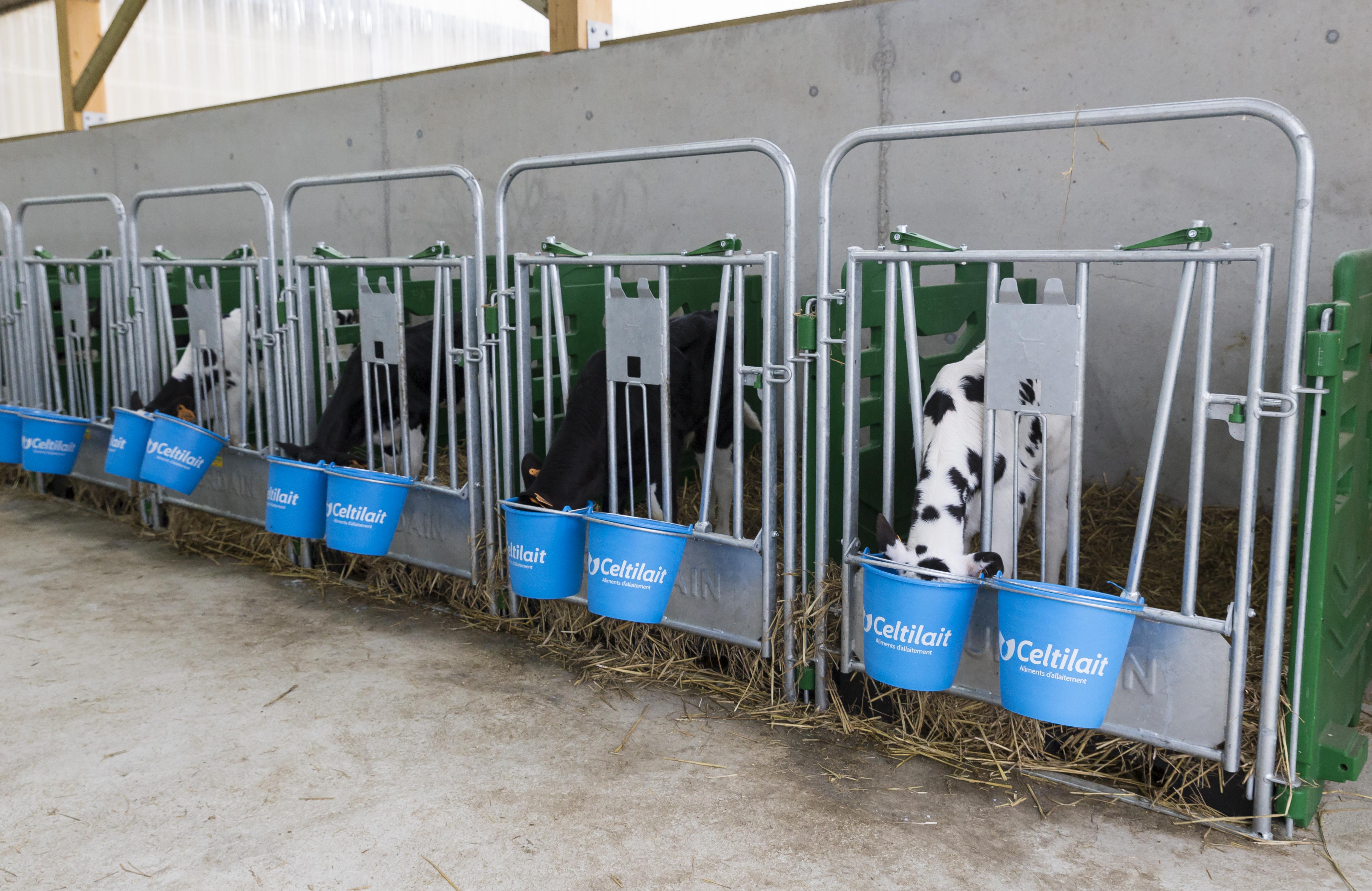 Plans D'alimentation: 4 Itinéraires Techniques Possibles Selon Les Objectifs Des éleveurs